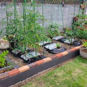 庭いじりの収穫物。