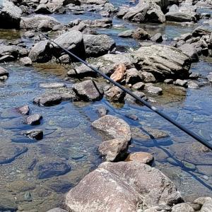 加茂川での鮎釣り、なかなか厳しい。