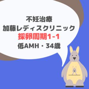 加藤レディスクリニック 採卵周期1-1 低AMH・34歳
