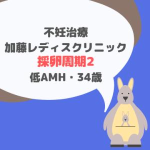 加藤レディスクリニック 採卵周期②_34歳・低AMH