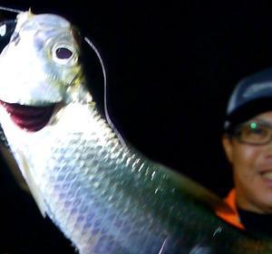 古代魚ターポンを釣りまくる☆(釣れる場所についてちょこっと記載有り)