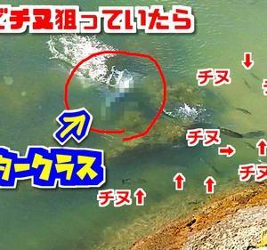 100円練り餌で挑むチヌ釣り!