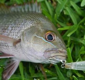 釣りのもう一つの楽しみ方