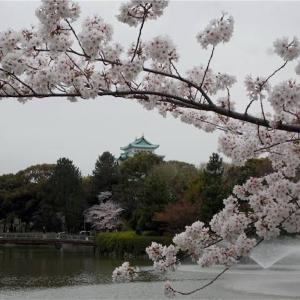 夜桜の花弁は白く