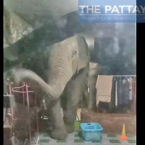 タイ)象3頭がバイクを追って家に突入!緊張のやりとり(動画付き)