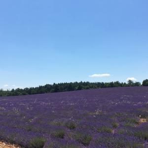 Photo Provence 南仏プロヴァンスに見られる花 エリックぺートル アート写真