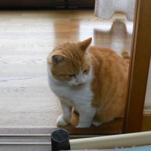 時雨の日にも、猫はお外へ行きたがる。