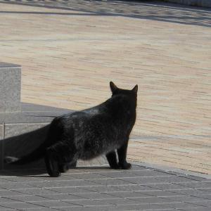 クロ猫はどこへ行った?