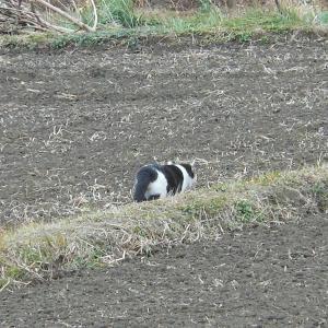 ノラ猫と飼い猫の間