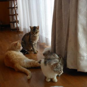 ダイちゃんとわたし ~その7・猫ラッシュ~