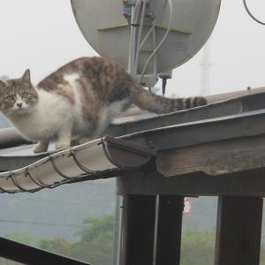 屋根の上のサイレン