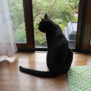 クロ猫の思惑