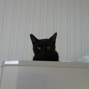 猫の梅雨明け宣言