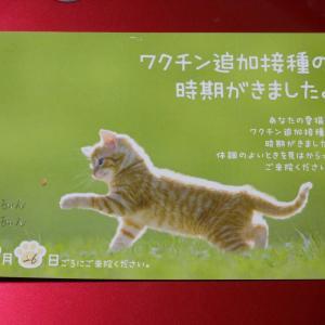 キジ猫とクロ猫、ワクチン接種に行く。