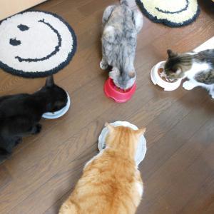 食欲の秋、猫の攻防戦。