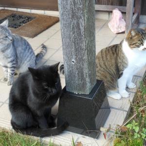 猫のごはん争い