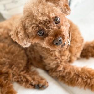 【犬】食器洗いに便利なモノ♪ぬめり解消法♪