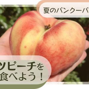 夏のバンクーバーを楽しむ②ドーナツピーチ(蟠桃)を食べよう!