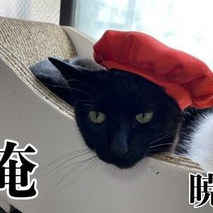 高齢化猫社会?