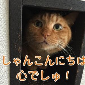 心 〜しん〜 。