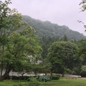 小雨の中の散歩