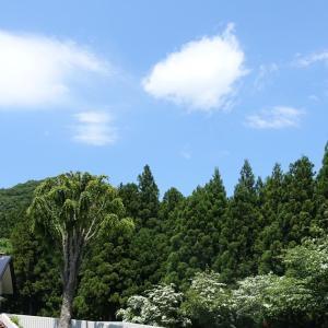 緑いっぱいの記念館と光太郎ランチ