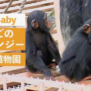 ふたごのチンパンジーと東山スカイタワー