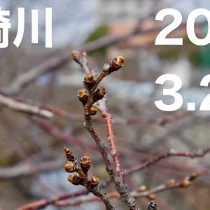 【2019年】山崎川の桜(随時更新)