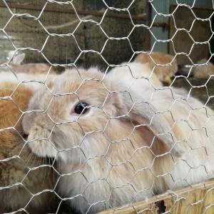福知山市動物園(福知山)のコスパが最高