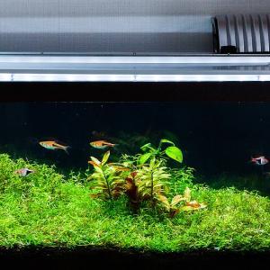 定期的な水換えと家庭菜園とアベノマスク