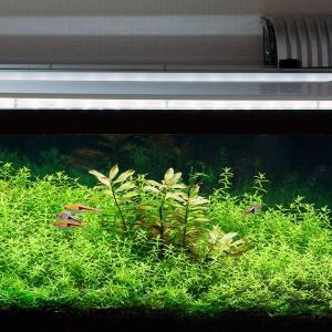 定期的な水換えと家庭菜園とプラレール