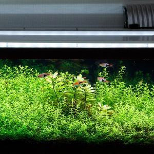 定期的な水換えと家庭菜園と家