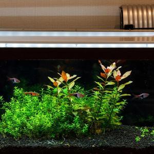 定期的な水換えと家庭菜園と伊勢神宮