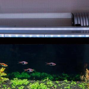 定期的な水換えと動物園