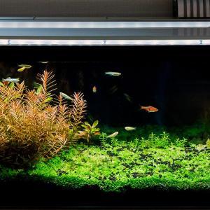 定期的な水換えと家庭菜園とBday