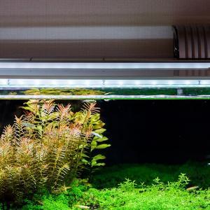 定期的な水換えと続DIY小屋裏収納(7)と家庭菜園