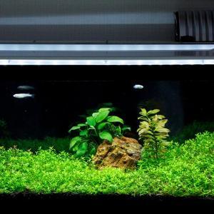 定期的な水換えと家庭菜園とスーパーGT