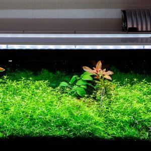 定期的な水換えと家庭菜園