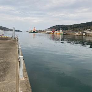 2月12日細島商業港釣行