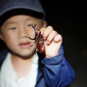 【2020】淡路島でカブトムシとクワガタ捕り。今年もいっぱい捕れました