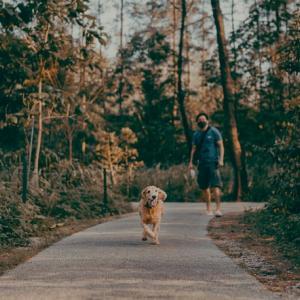 【快適散歩】ペットを理解した散歩を ペットカート