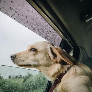 【ペットコラム】台風時の犬・猫対応 ペットライフ