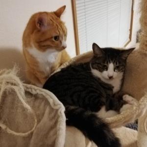 猫の激しいケンカ。でもニコニコしちゃうの何でだろ~