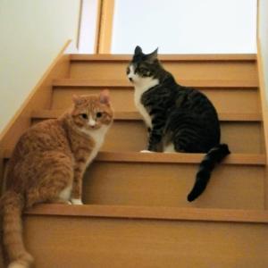 2匹目の猫を迎え入れた時の話①