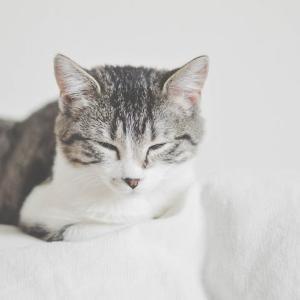 2匹目の猫を迎え入れた時の話②