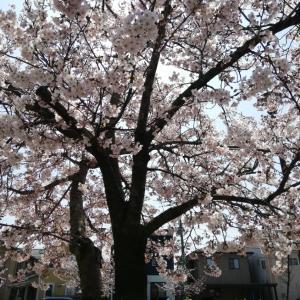ギャップに心が行ったり来たり・・モヤモヤザワザワな春