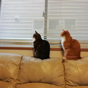 シンクロする猫たち&猫に憧れる私。
