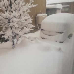 入会カウンセリング。大雪なので急遽オンラインになりました。