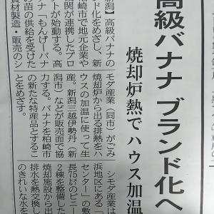 新潟県柏崎市がバナナを高級ブランド化させます
