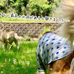 ◎遠足コース◎京都編